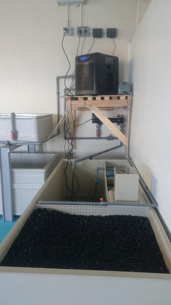 Shellfish tanks filter and chiller