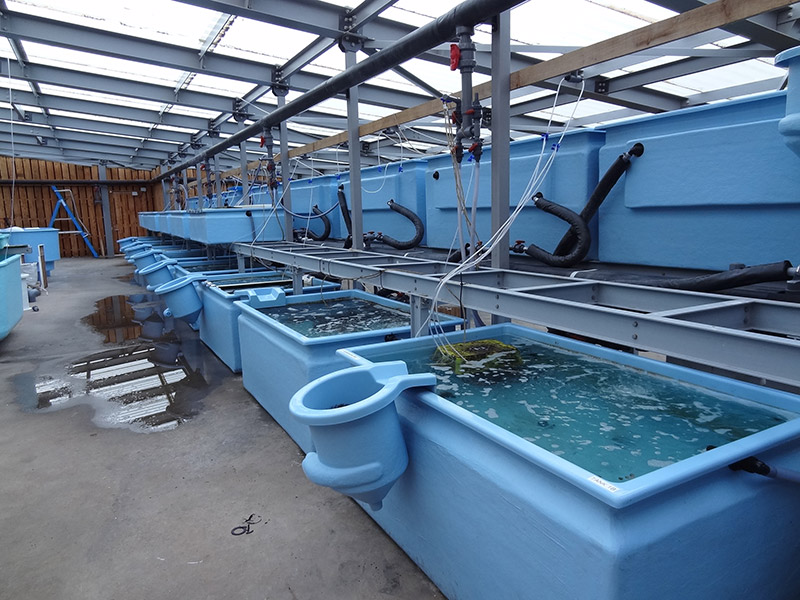 research aquarium st abbs